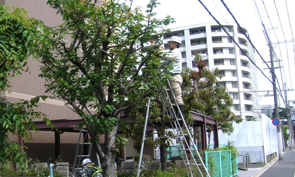 マンション植栽管理